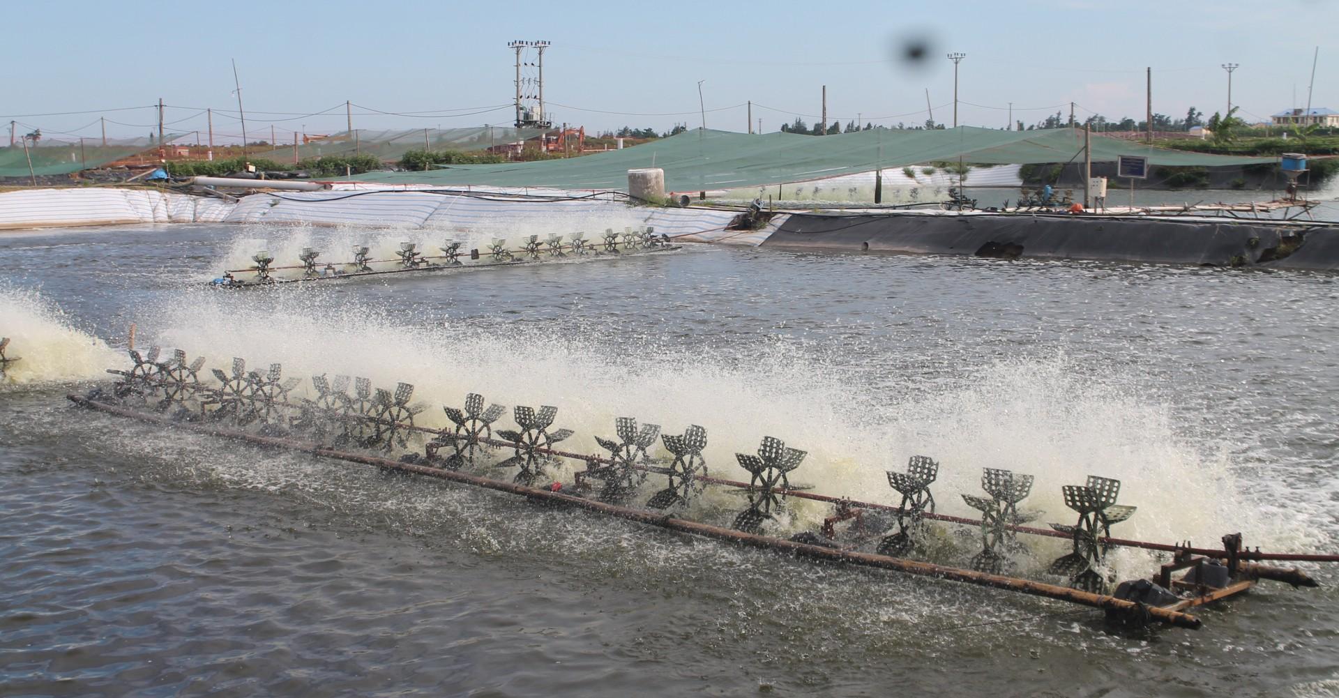 Nước nuôi trồng thủy sản sử dụng Chlorien để xử lý