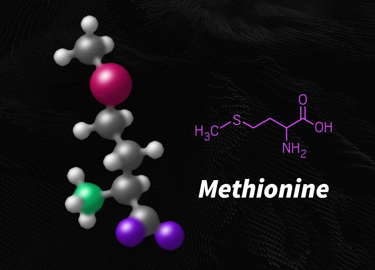 methionine còn hỗ trợ hệ tiêu hóa