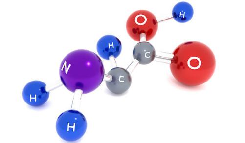 4 nguyên tố chính cấu tạo nên axit amin