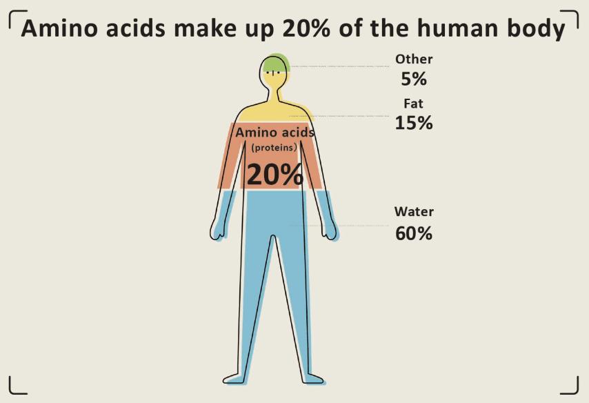 Axit amin có tác dụng gì với sức khỏe con người