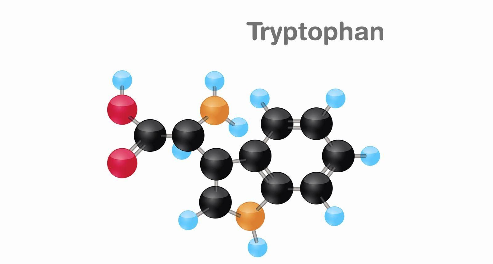 Tryptophan là axit amin giúp duy trì cân bằng nito