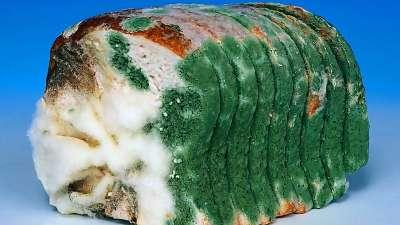 Các loại nấm mốc có thể ăn được trong thực phẩm