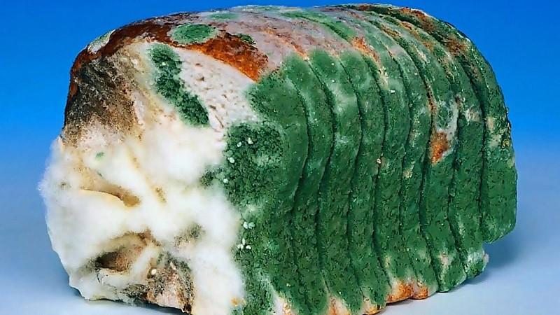 Mốc xanh trên ổ bánh mì