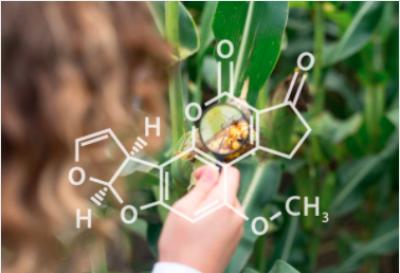 Aflatoxin là gì? Hiểm họa từ độc tố nấm trong thực phẩm có thể gây ung thư